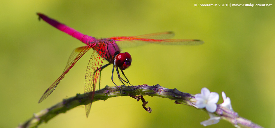 Dragonfly – Play of light