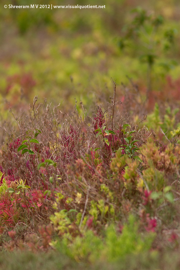 Colourful plants in the mangroves
